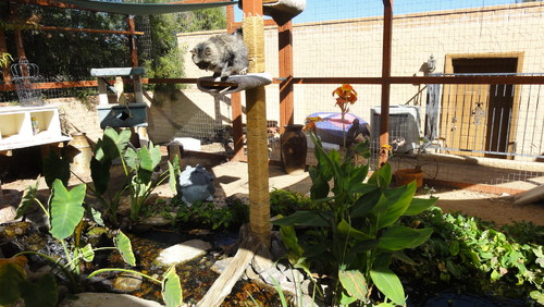 Catio Pond - A Tale of Two (or More) Kitties