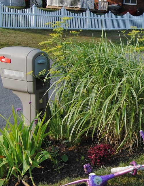 What Plant(s) Surround Your Mailbox? Showoff