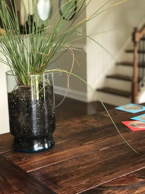 Ornamental grass identification help ornamental grass identification help workwithnaturefo