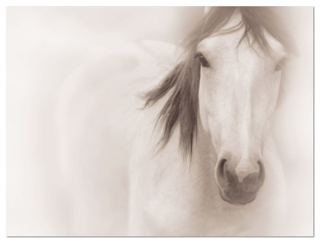Large wall art • horse photography • black and white photography 16x20