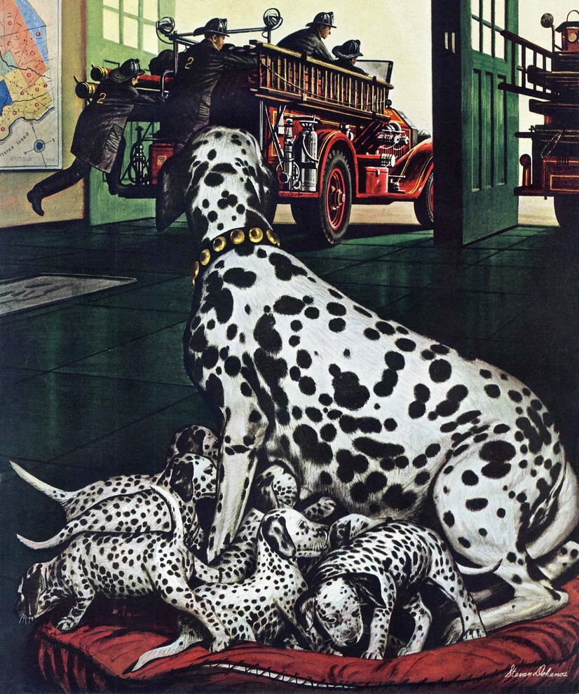 Dalmatian And Pups Painting Print On Canvas By Stevan Dohanos Contemporary Prints And Posters By Marmont Hill
