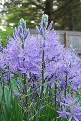 Beautify Your Garden With These 15 Blue Flowers