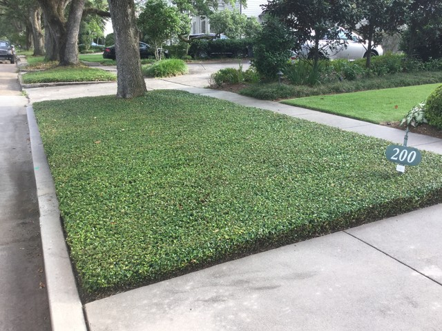 This is an example of a contemporary landscaping in New Orleans.