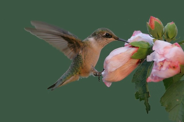 Hummingbird and Butterfly Garden Tropical Miami by