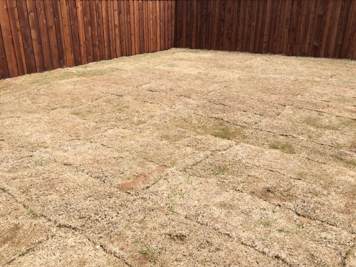 How To Take Care My New Sod Lawn