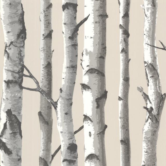Tuxbury Beige Birch Tree Wallpaper, Bolt