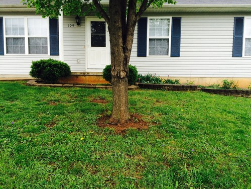 Any Ideas For Landscaping This Recently Acquired Rental Property Near St Louis MO Something Simple Because Renters Usually Dont Invest Much Time On The
