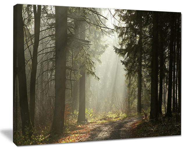 """""""dark Green Forest With Sun Rays"""" Canvas Print, 40""""x30"""". -1"""