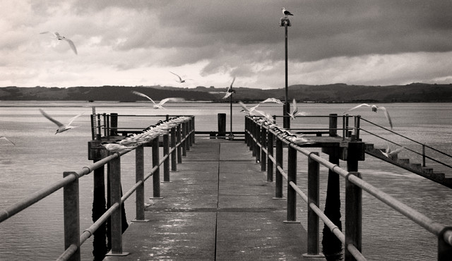 Shelly beach jetty new zealand fine art black and white photography limited ed