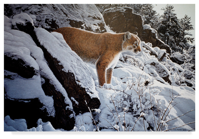 CANVAS Mountain Lion in Snowfall Art print POSTER
