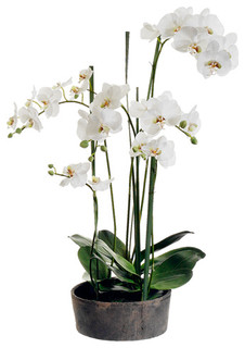 Silk Plants Direct Phalaenopsis Orchid Plant, Pack of 1