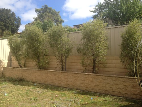 landscaping ideas hiding a colourbond fence