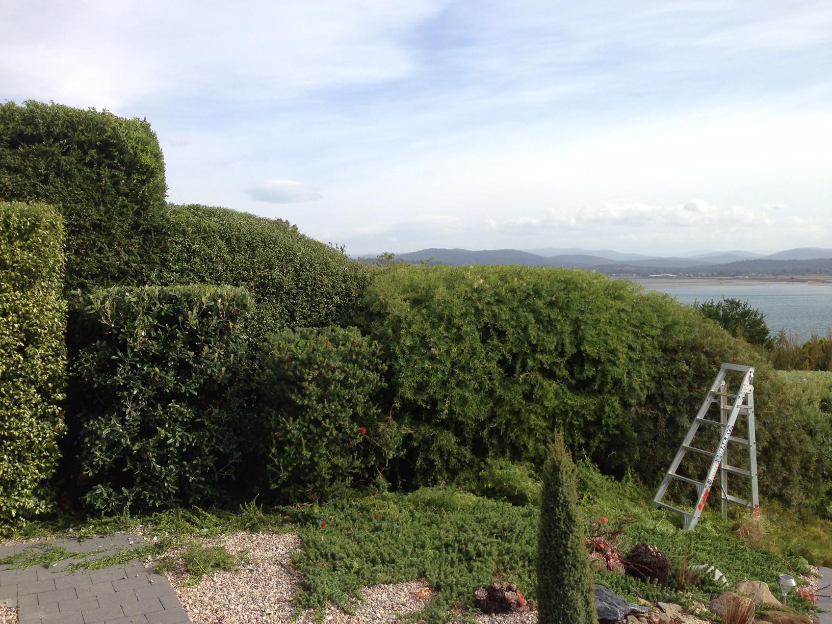 Garden Maintenance - Pruning