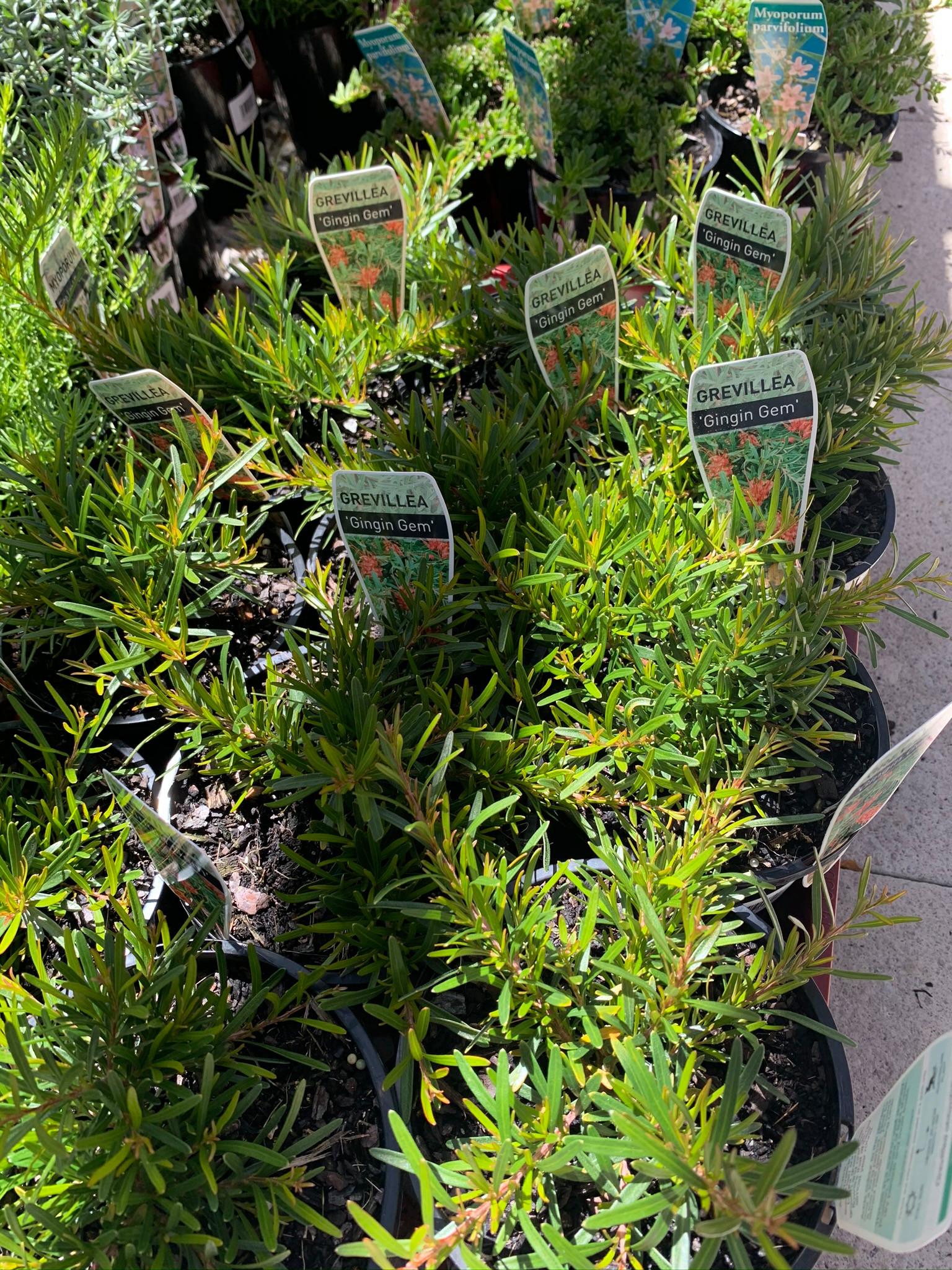 Plant Supply