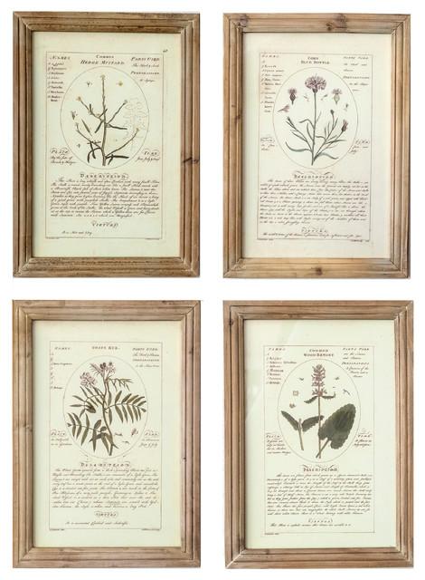 4-Piece Notated Framed Botanical Prints.