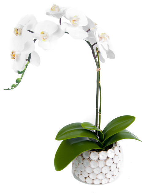 White Phalaenopsis Orchid In Cream Vase Contemporary