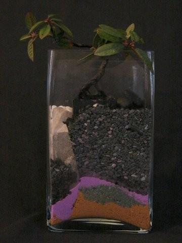 Rhamnus (CA Coffeeberry)