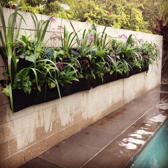 Design ideas for a contemporary pool in Brisbane.