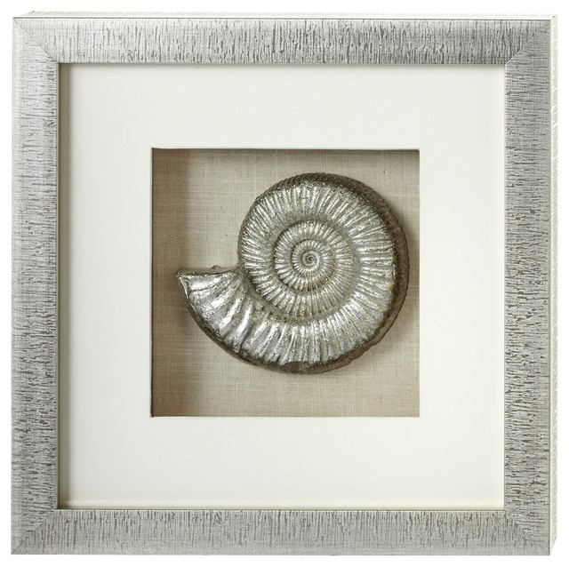 Nautilus shell shadow box wall decor