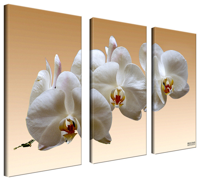 3 Piece Wall Art Set ready2hangart bruce bain 'white orchid' canvas wall art (3-piece