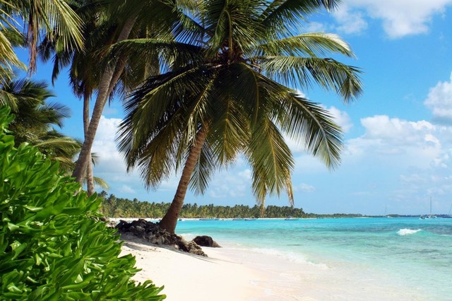Tropical Island Beach With Palm Trees Wall Mural   36 Inches W X 24 Inches H