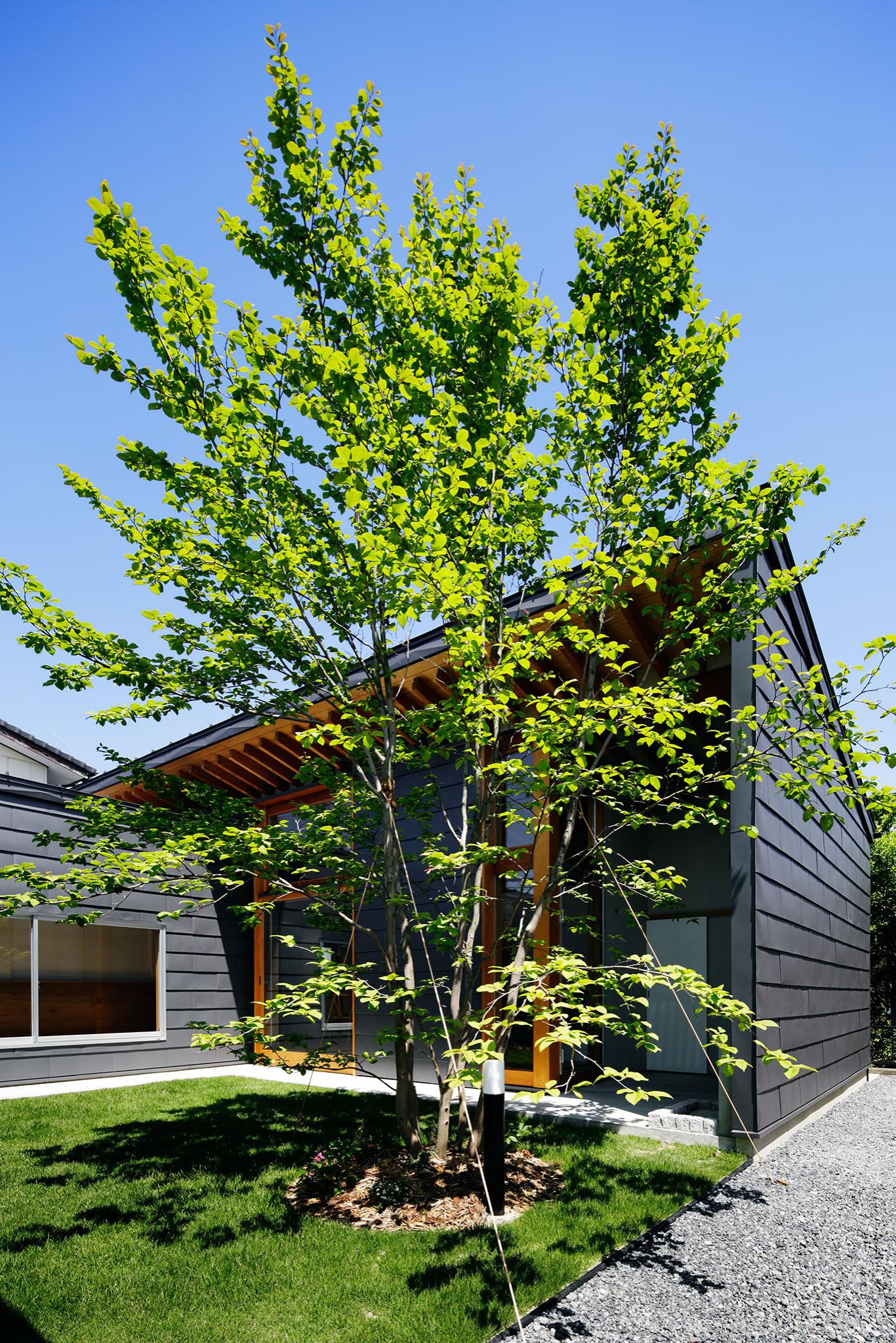 コの字の家/中庭