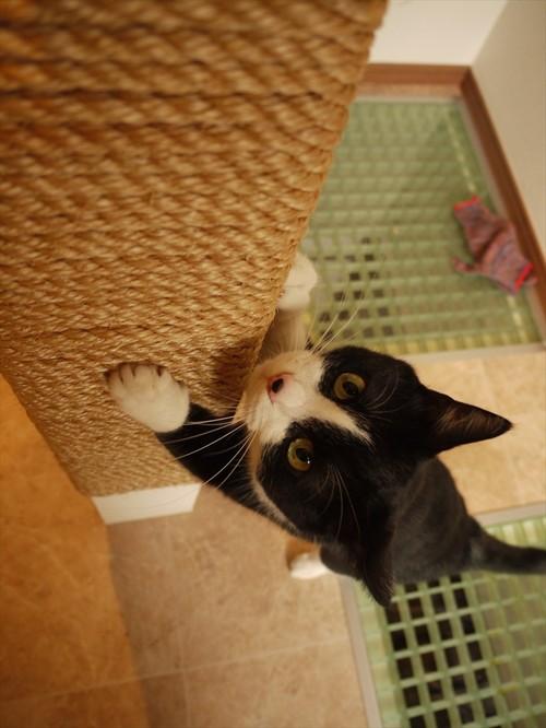 【Houzz】猫と人の幸せな暮らし:「福を招く猫」千葉ちゃんと「猫と建築社」の日常 13番目の画像