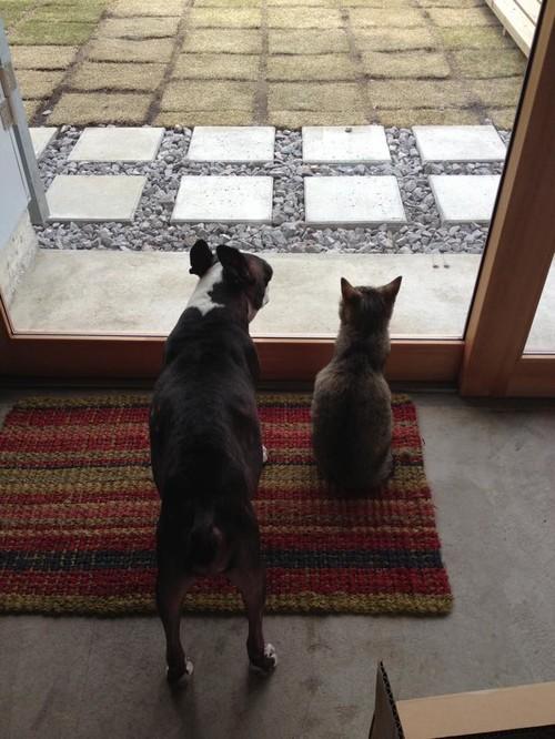 【Houzz】ペットが安全で快適に夏を過ごすためのポイント 12番目の画像