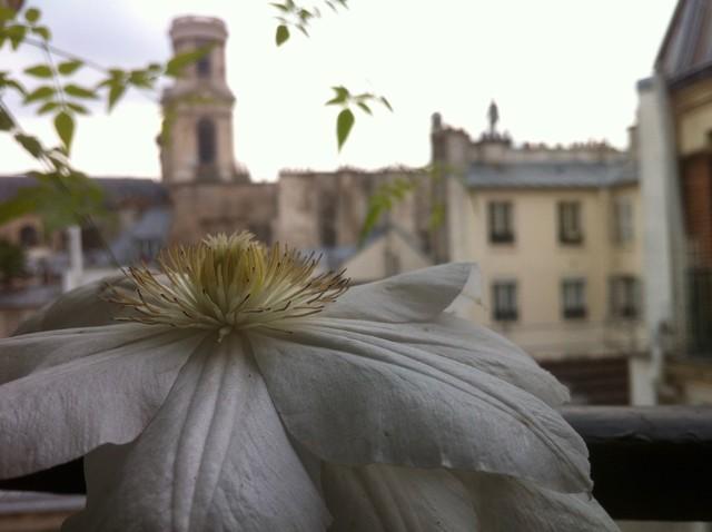 Am nagement paysager d 39 un mini balcon filant paris - Amenagement de balcon ...