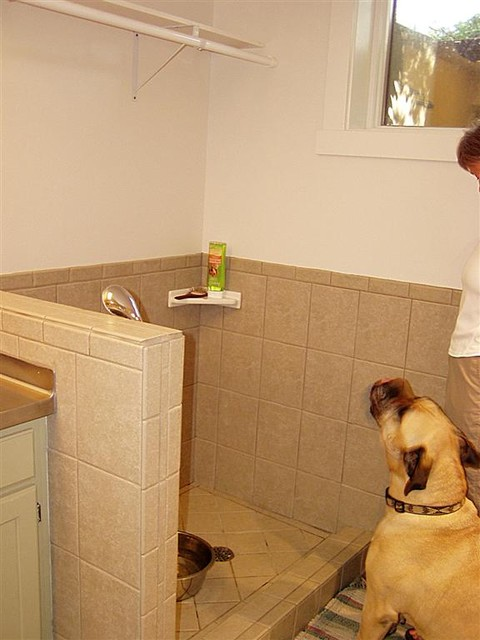 Dog Shower Eclectic Basement Salt Lake City By