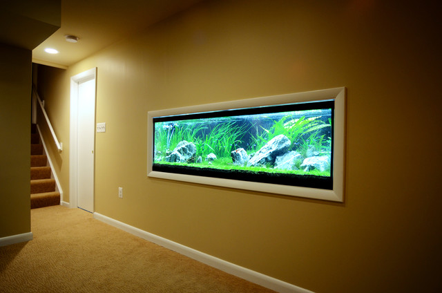 Fish tank contemporary basement baltimore by b for Fish tank riddle