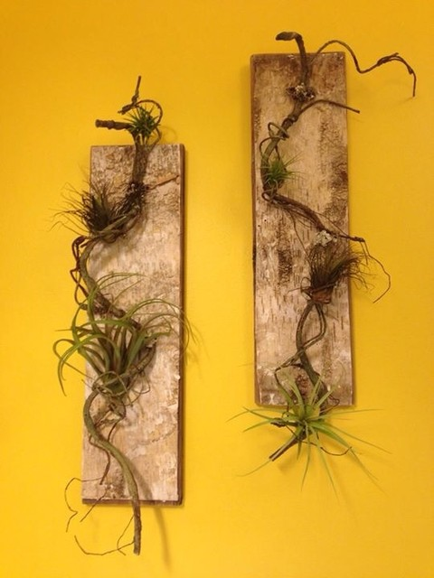 Bathroom wall art air plants tillandsia mounted on for Air plant wall art