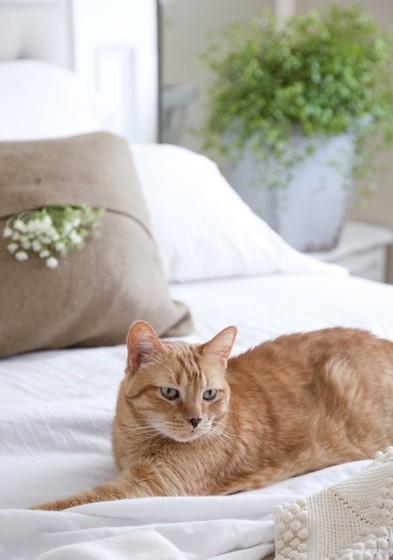 【Houzz】ペットが安全で快適に夏を過ごすためのポイント 18番目の画像
