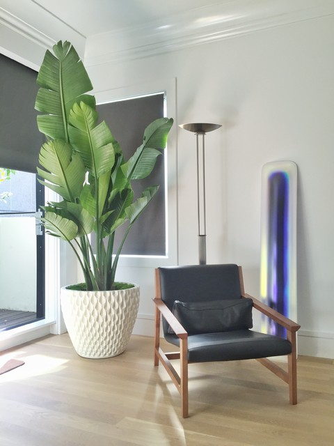 Modern house plants modern bedroom san francisco for Modern indoor plants