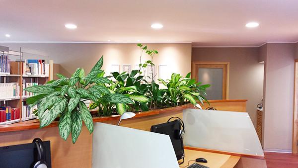 Jardiniere D Architecte D Interieur Home Office Other