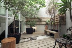 10 Tipologie di Alberi da Balcone che Possono Stare in Vaso