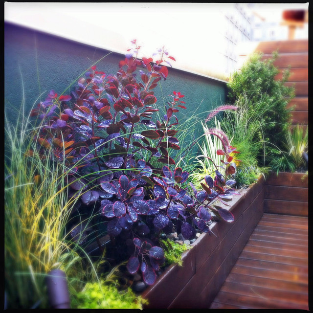 Manhattan terrace deck roof garden planter boxes low for Low maintenance outdoor potted plants