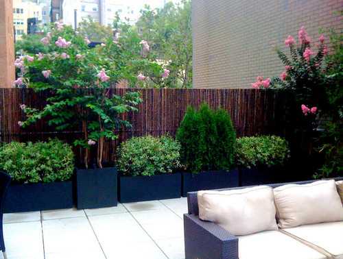 This shorter version of a mahogany stained wooden fence is dressed up by a wealth of container gardens and ornamental trees placed in front of it. The taller trees and bushes add a little more privacy to the organic fence.