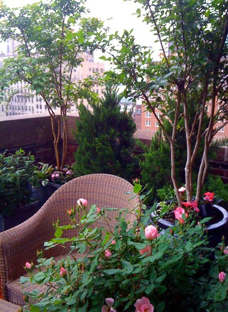 NYC Small Terrace: Roof Garden, Container Plants, Balcony, Roses, Trees,