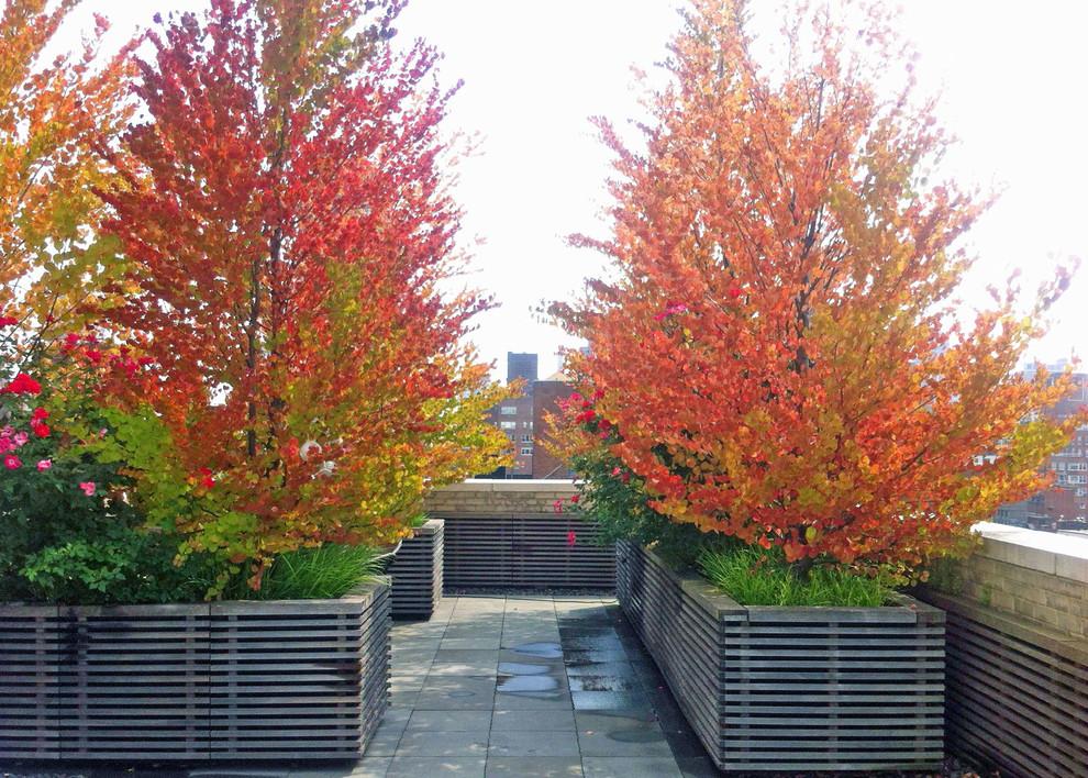 Deck container garden - contemporary rooftop deck container garden idea in New York
