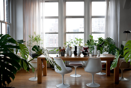 Tips for Buying Indoor Plants