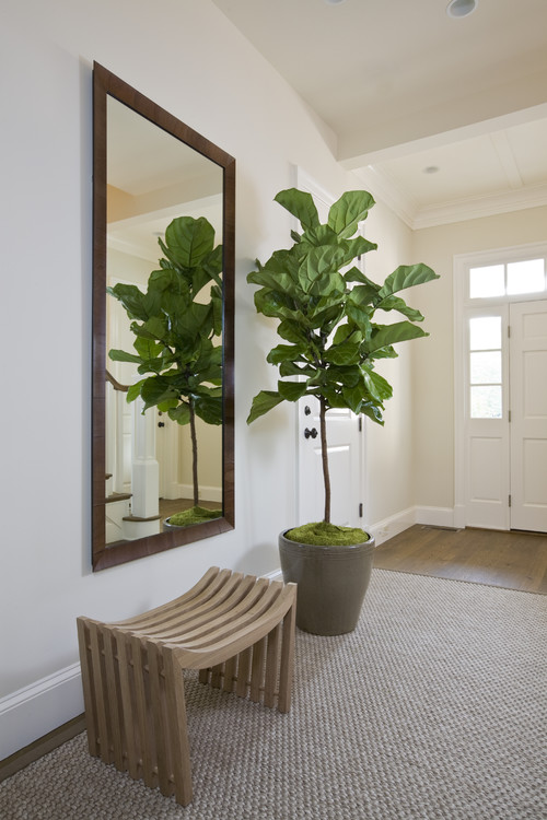 Is The Fiddle Leaf Fig Faux Or Real