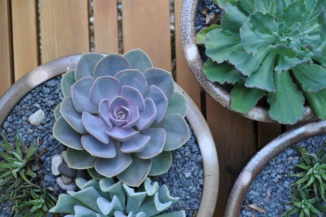 Bruce's Garden eclectic-exterior