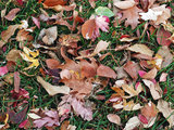 modern 5 Ways to Put Fall Leaves to Work in Your Garden (9 photos)