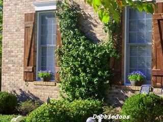 Rustic Exterior rustic-exterior