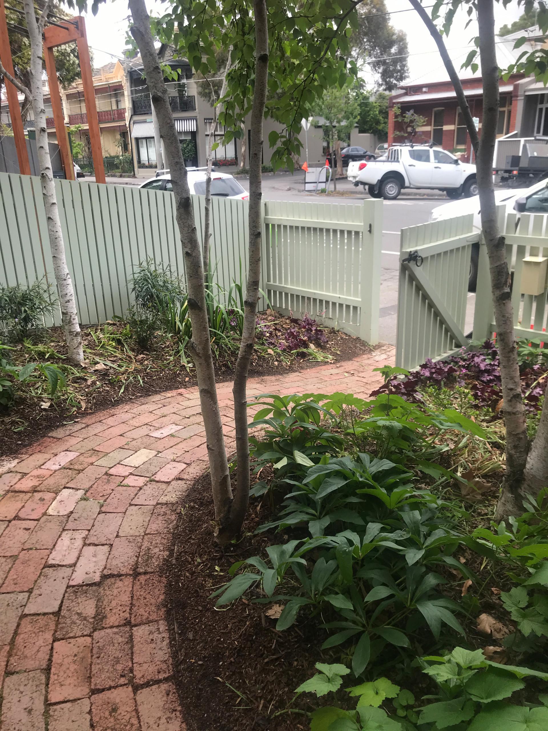 Scarborough Front Garden in Clifton Hill
