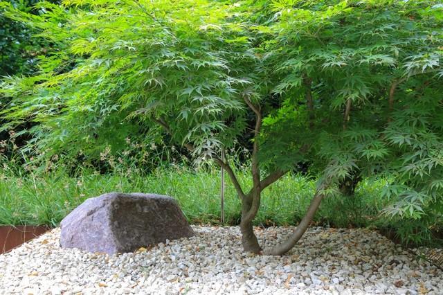 Potsdamer Gärten ausgesuchte bepflanzungen im stadtgarten modern garten berlin