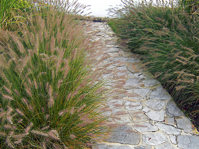 Grass garden traditional landscape other metro by for Modern grasses landscaping