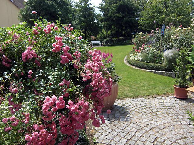 Rose Garden 1 traditional-landscape