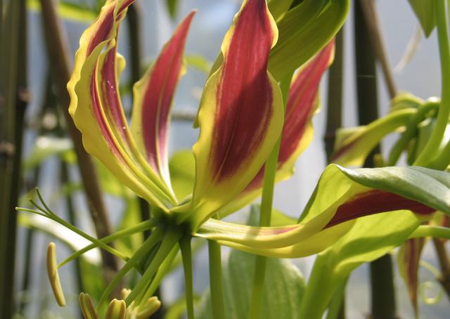 Rosen Moderner Garten : Seerosen moderngarten